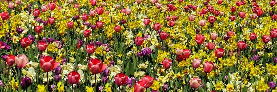 Proljetno cvijeće